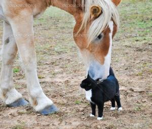 cat & horse