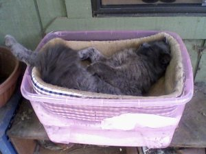 Graymalkin in his basket