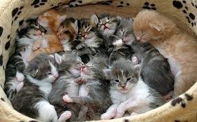 too many kittens2