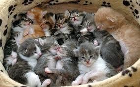 too many kittens2